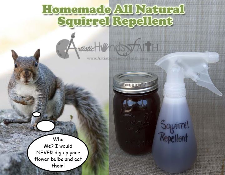 Squirrel Repellent How To Keep Squirrels Out Of Your Flower Beds Gardening Pinterest