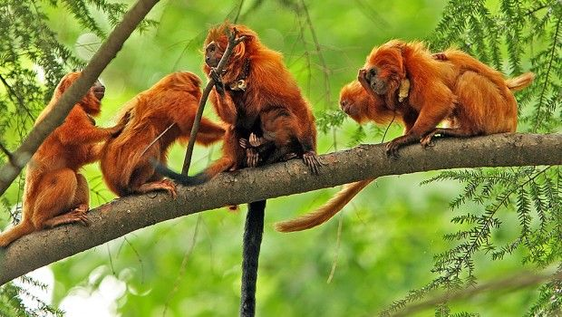 Image result for wild animals in amazon rainforest