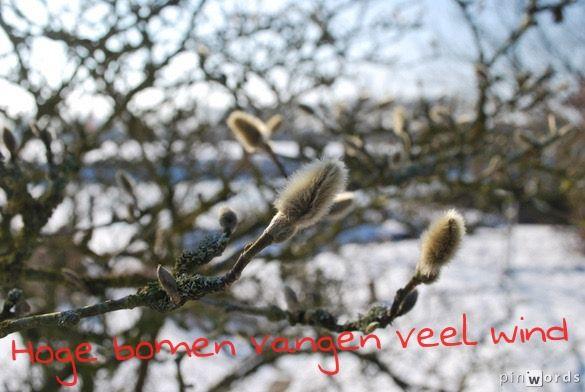Citaten Over Bomen : Hoge bomen vangen veel wind citaten spreuken