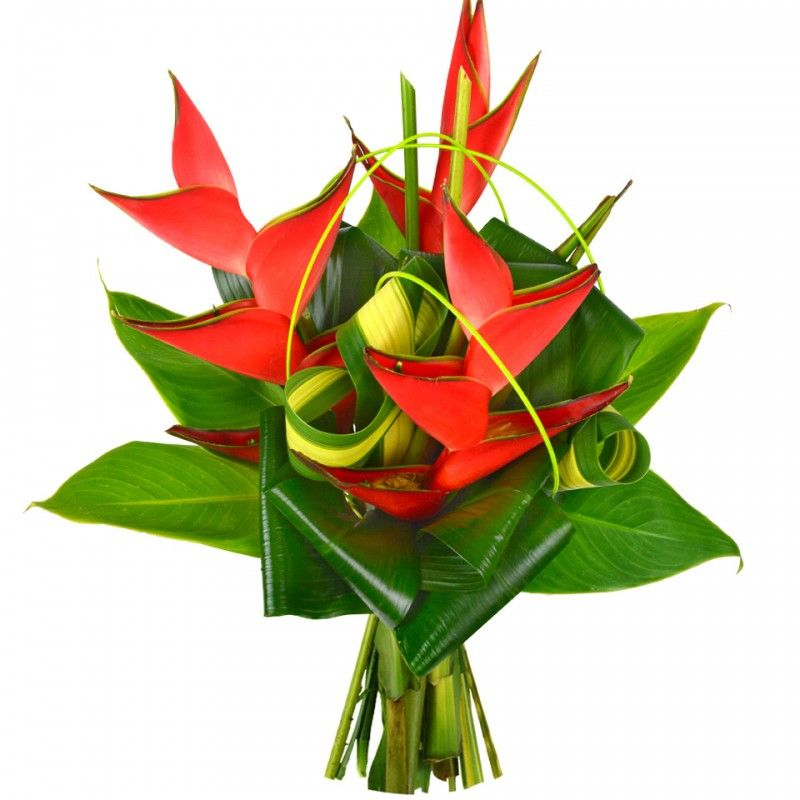 exo balisier naturel eyes bouquet de fleurs fleurs. Black Bedroom Furniture Sets. Home Design Ideas