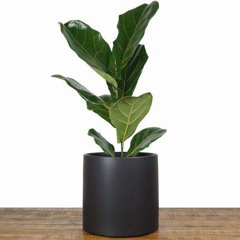 Black Plant Pot Large Indoor Planter Flower Pot Modern Etsy