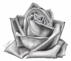 Resultado De Imagen Para Dibujos De Rosas Realistas Dibujos De
