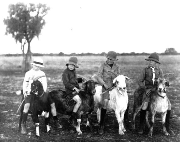 An Adorable Collection Of Children Riding Goats Vintage Photos