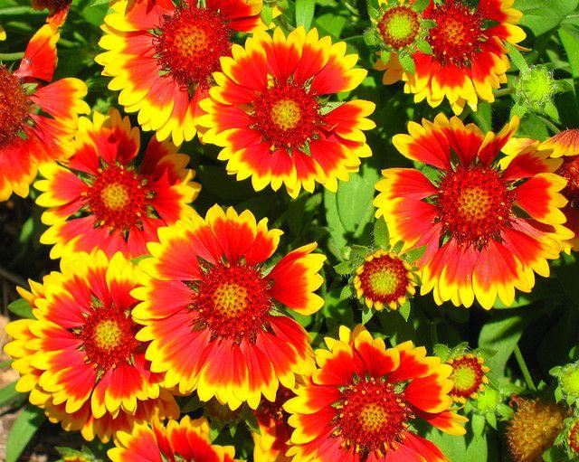 Monona Terrace Rooftop Flowers Met Afbeeldingen