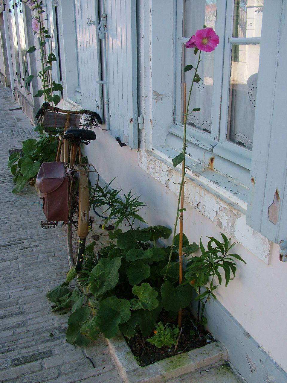bicyclette et rose tr mi re ars en r ile de re pinterest bicyclettes et roses. Black Bedroom Furniture Sets. Home Design Ideas