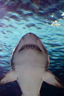 For your bedroom ceiling ~ Shark bedroom decor - plaster this poster to your ceiling so when you wake up.....HELL - O