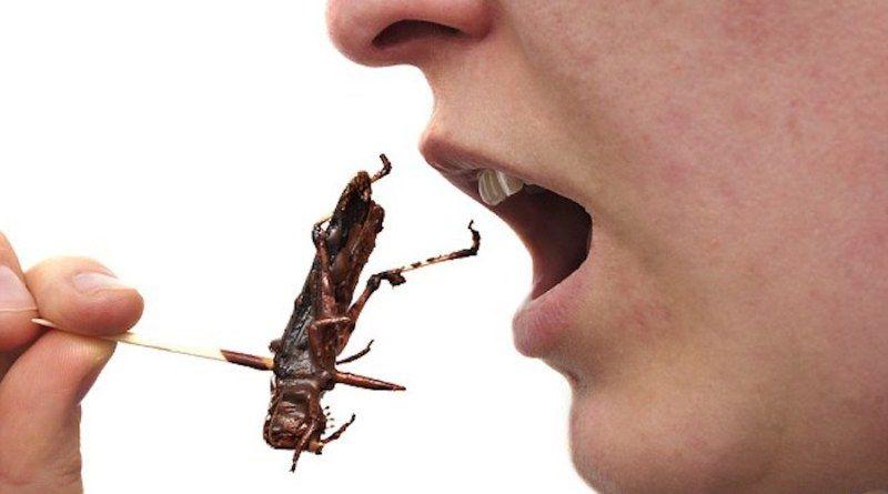 ¿Sabias que los grillos es una fuente potente de proteínas?