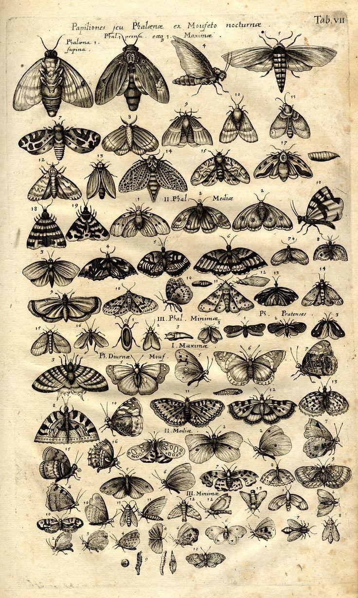 Wallpaper of different kinds of butterflies🦋