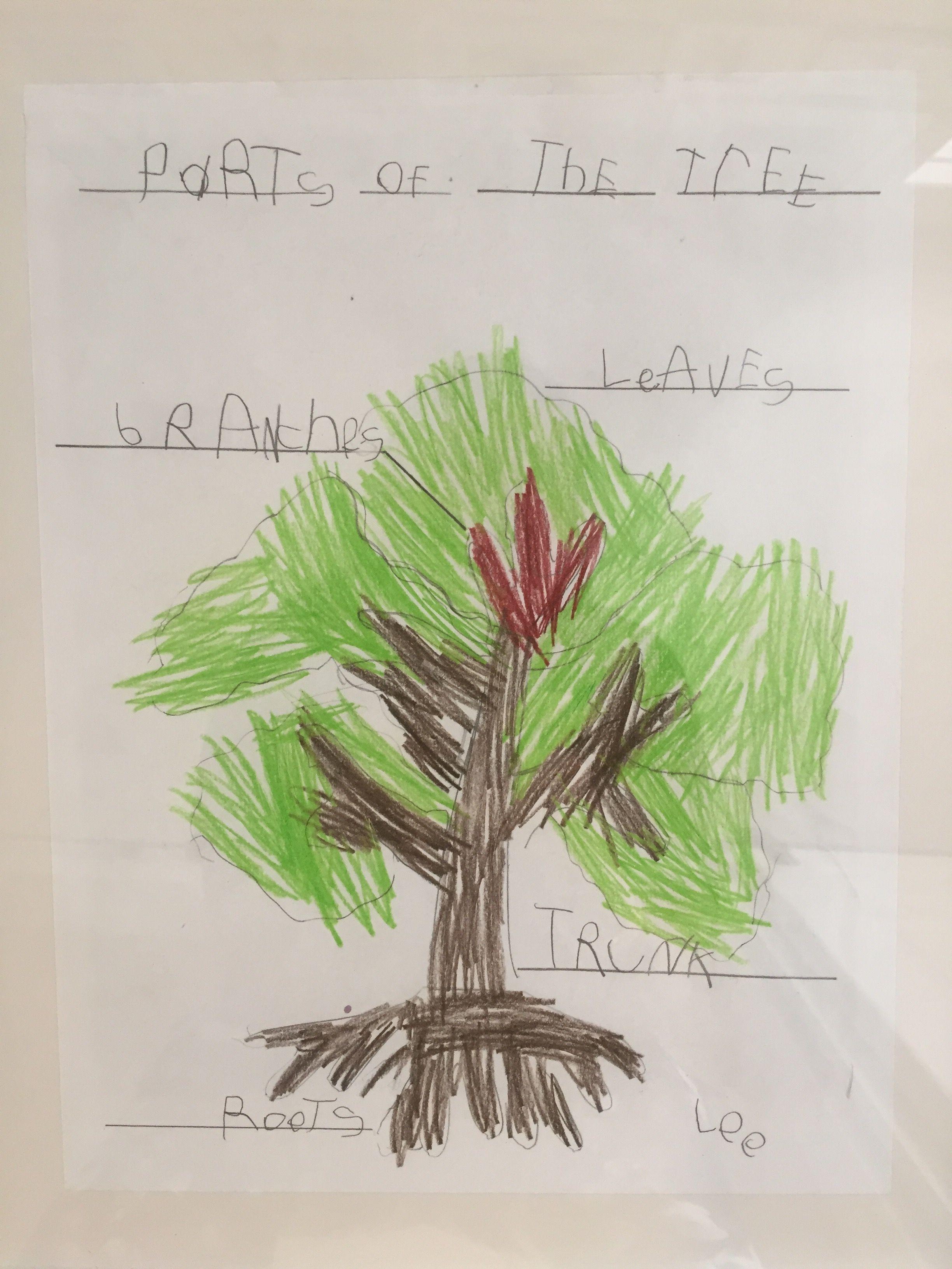 Anatomy Of A Tree Preschooler Craft Ideas Pinterest Trees A