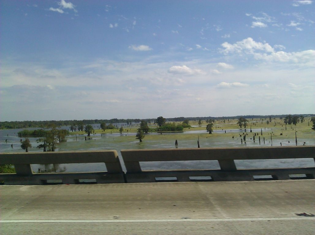 Gorgeous swamps just love there beauty took this off of the bridge .