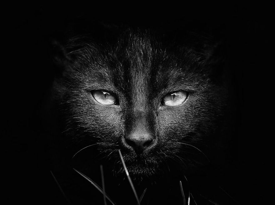 The mysterious lives of cats captured in black white