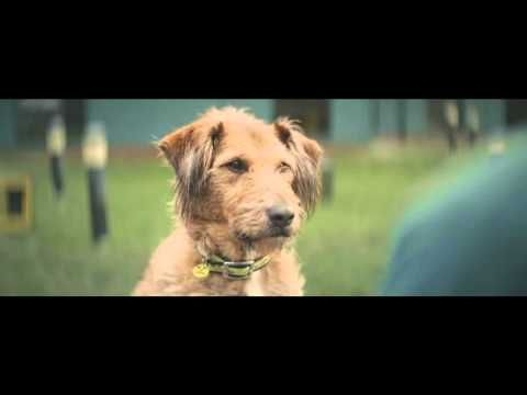 Dogs Trust Advert Song 2016 'I Only Want To Be With You