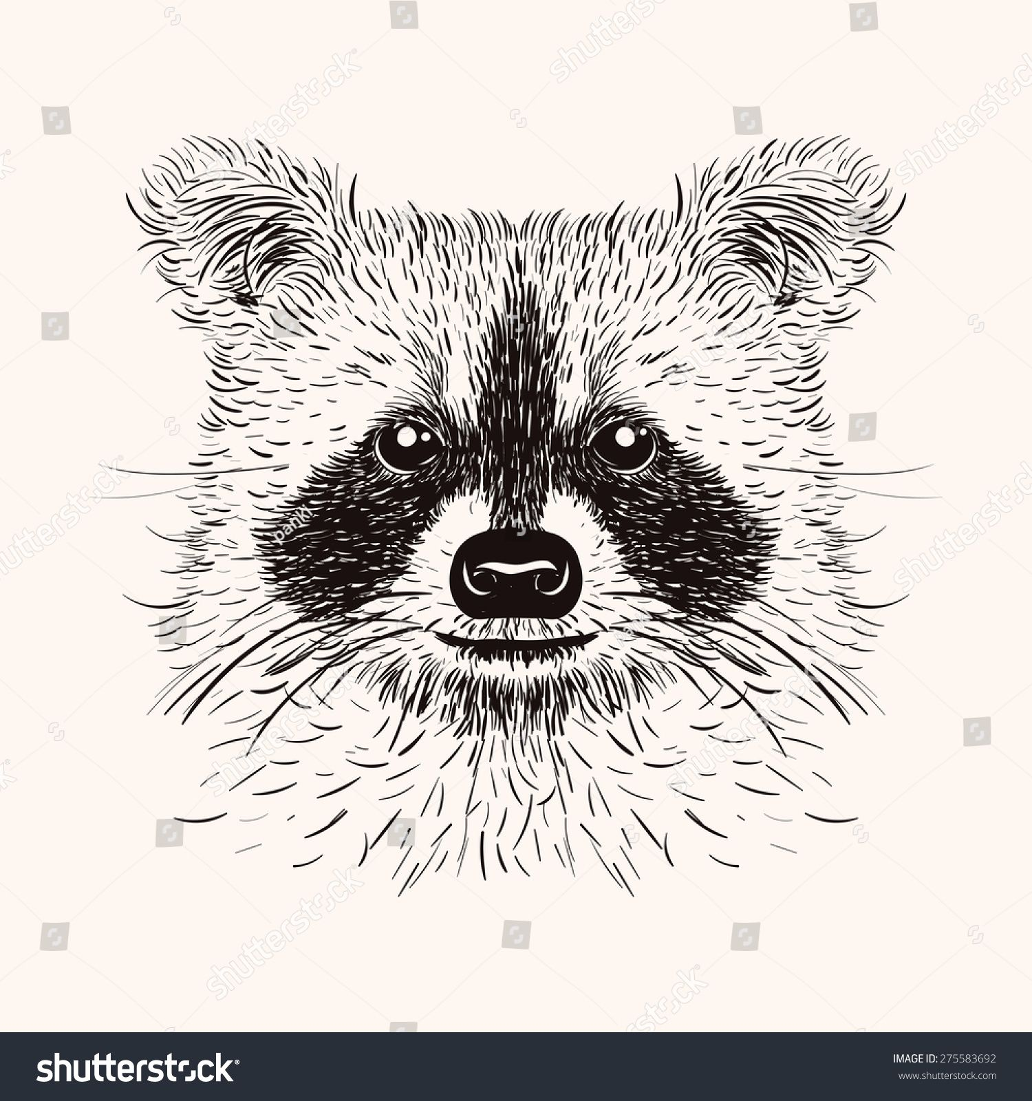 stock-photo-sketch-liner-raccoon-hand-drawn-illustration-in-doodle ...