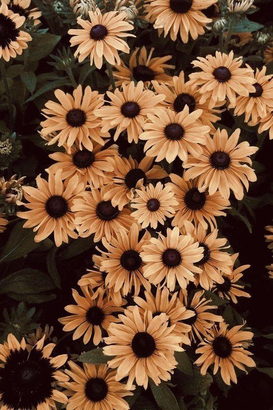 #aesthetic #Pintrest #pins #pretty #beautiful #sunflower #sunflowers