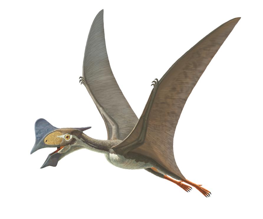 matrice Recur nálet jurassic world flugsaurier amazon ...
