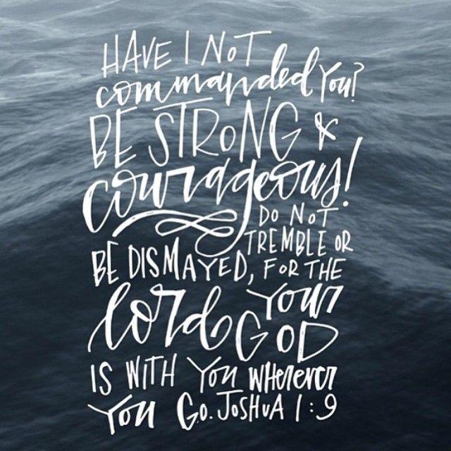 Do not be afraid; do not be discouraged. #MrBowerbird