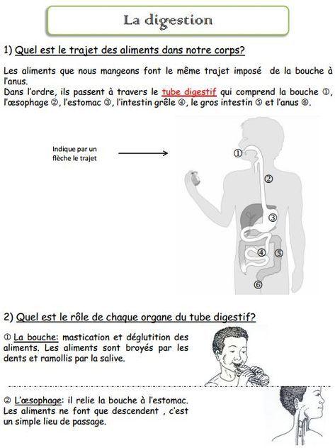 L Appareil Digestif Appareil Digestif Science Enseignement