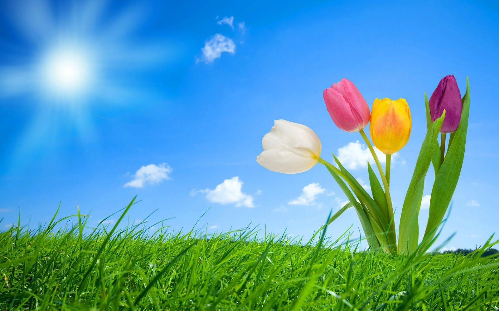 Spring Hd Wallpapers Backgrounds With Images Spring Wallpaper