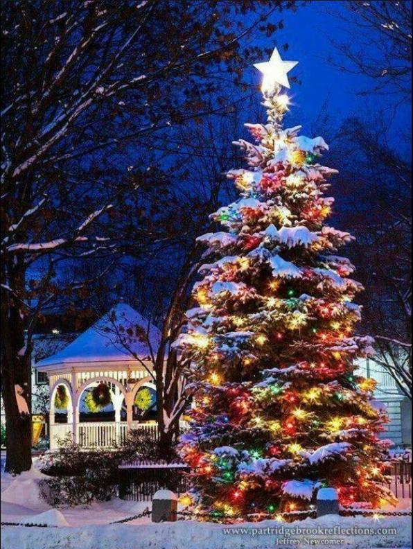 Pin By Jen Hartnett On Christmas Treesoutside Christmas