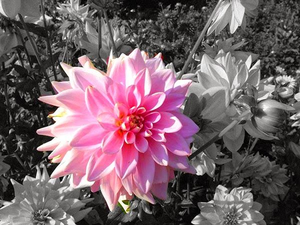 Selective Coloring in Paint.NET