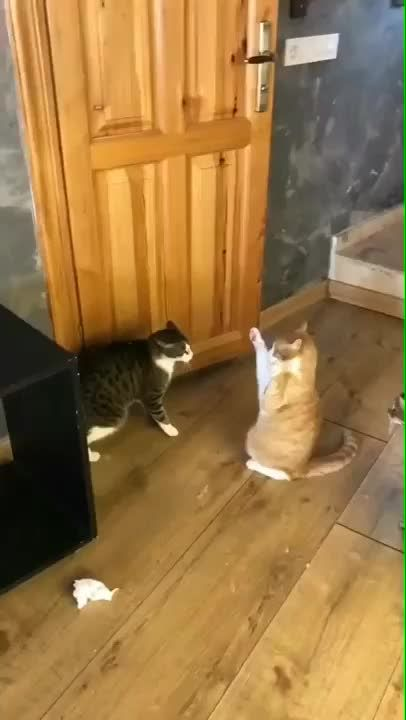 Gentle Cat Vids Providing A Moment Of Peace