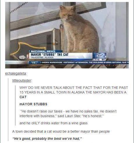 Haha! Mayor Stubbs - the greatest most powerful cat in all Alaska!!!