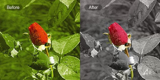 Change Background Color Of Picture Online Free
