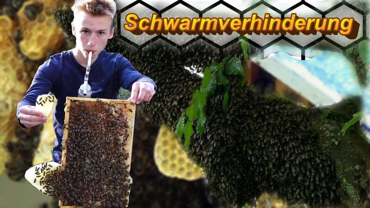 Die Einfachste Effektivste Schwarmverhinderungsmethode Kombinierte Wi Bienen Schwarm Imkerei