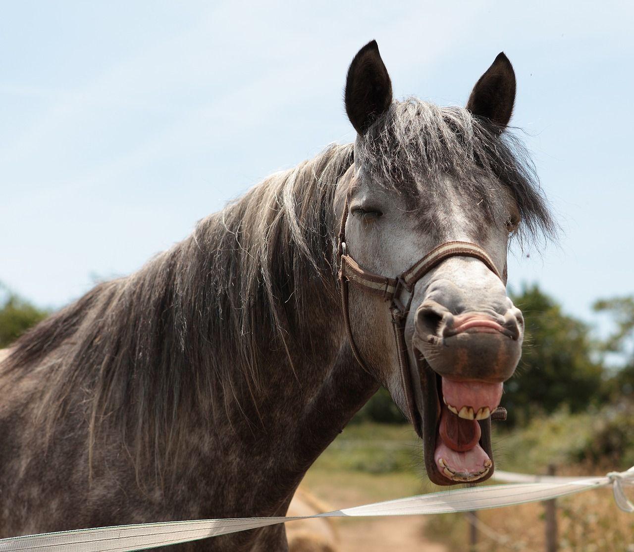 Cheval Tete image gratuite sur pixabay - tête de cheval, cheval, animal | horse