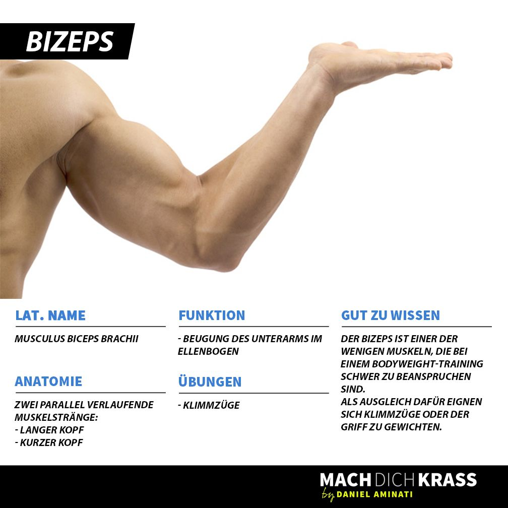 Atemberaubend Bizeps Ideen - Anatomie Ideen - finotti.info