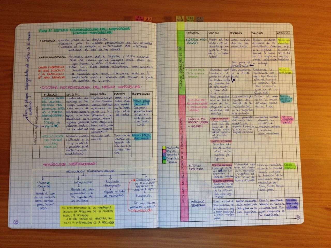 My anatomy revision notebook for neuromuscular systems of the head ...