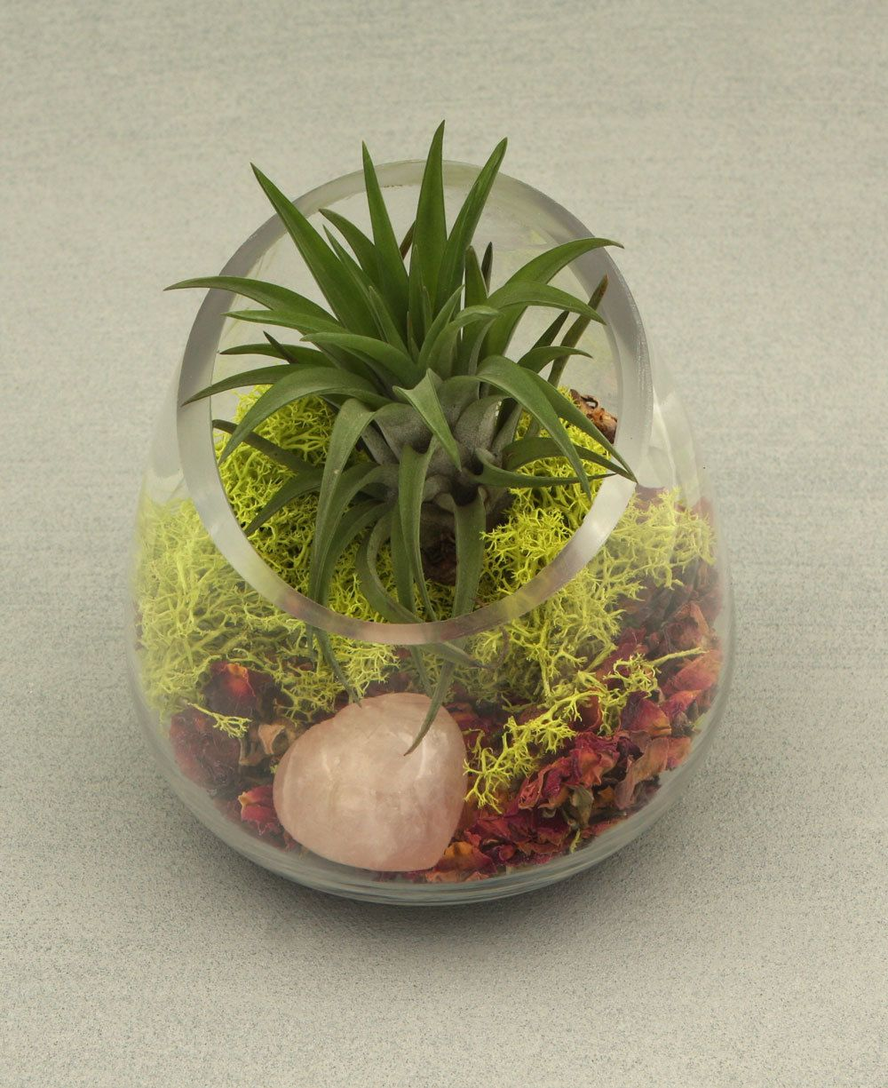 Rose Quartz Healing Love Terrarium With Air Plant Air Plants  # Faire Support Aquarium Beton Cellulaire