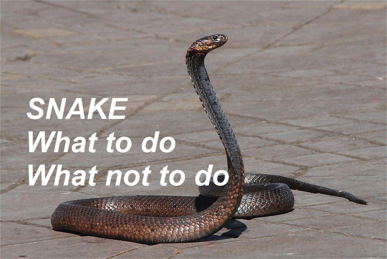 Do Garden Snakes Bite - garden collection picture |Garden Snake Bite