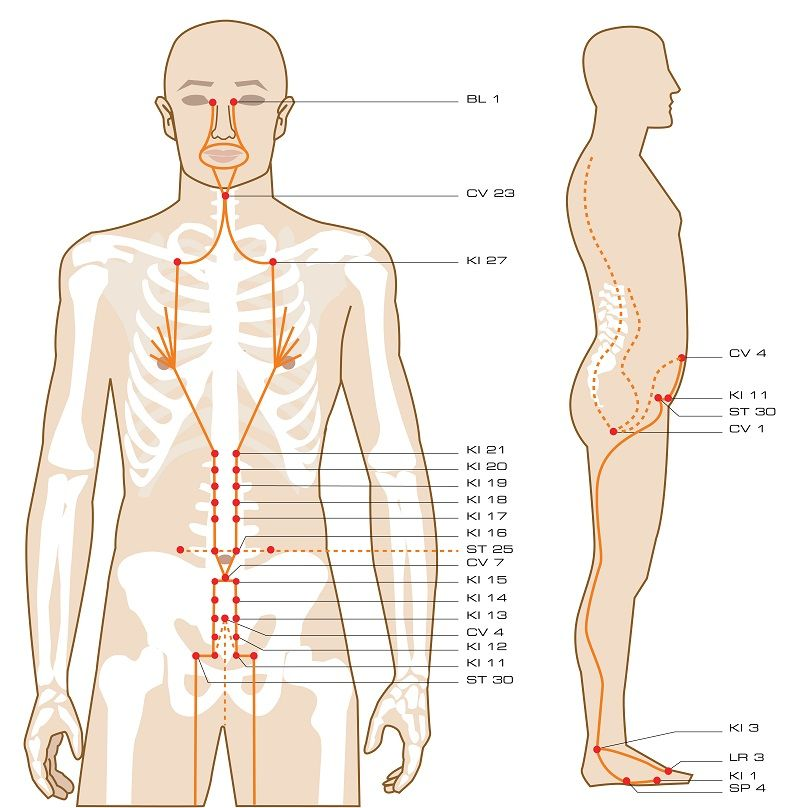 The Acupuncture Points Guidethe Entire Guide Is Available In Able Pdf Ebook Format Click Here To Learn More