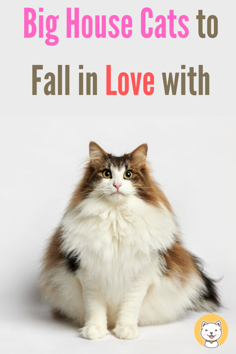 900 Cats Blog Ideas In 2021 Cat Facts Cats Cat Care