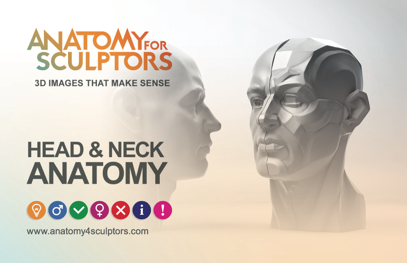 HEAD & NECK ANATOMY by anatomy4sculptors https://www.kickstarter.com ...