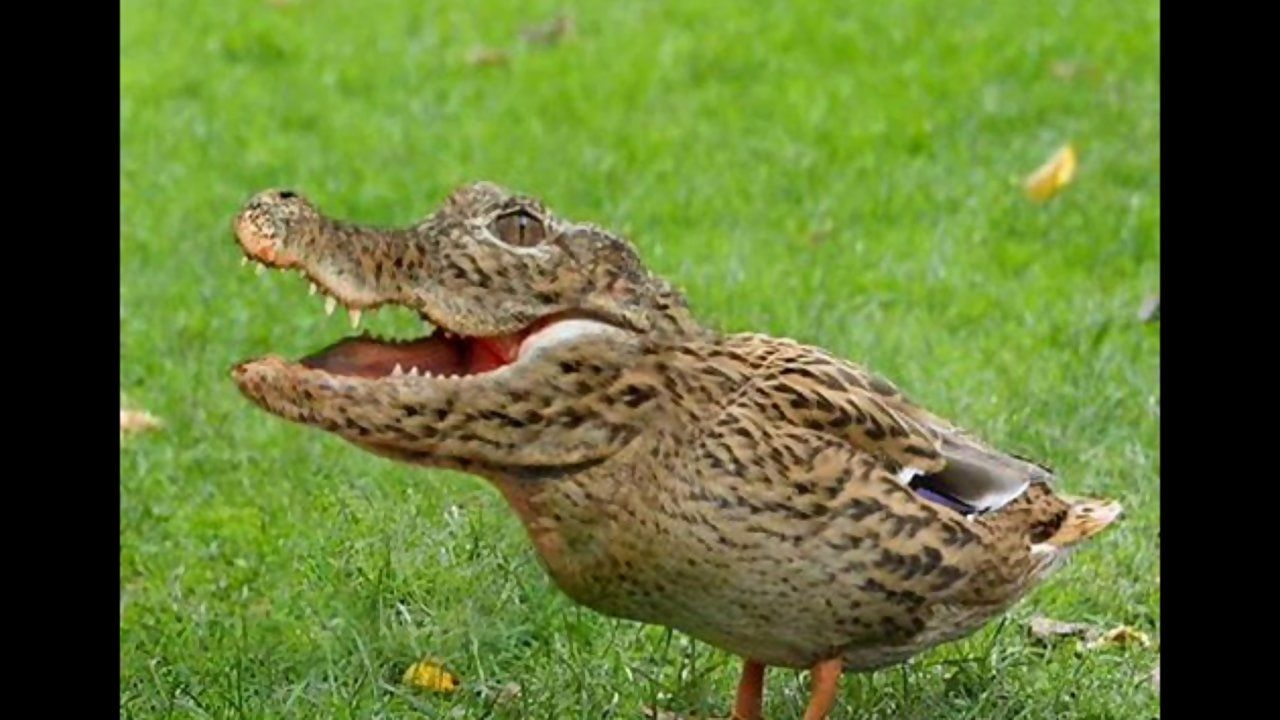 Funny Photoshop Animal Hybrids Has Science Gone Too Far? Or Not Far Enough?  Visit for more Hybrid Animals!   Photoshopped animals, Animal mashups,  Weird animals