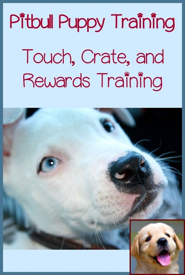 House Training A Puppy Youtube And Dog Behavior Kicking Up Dirt