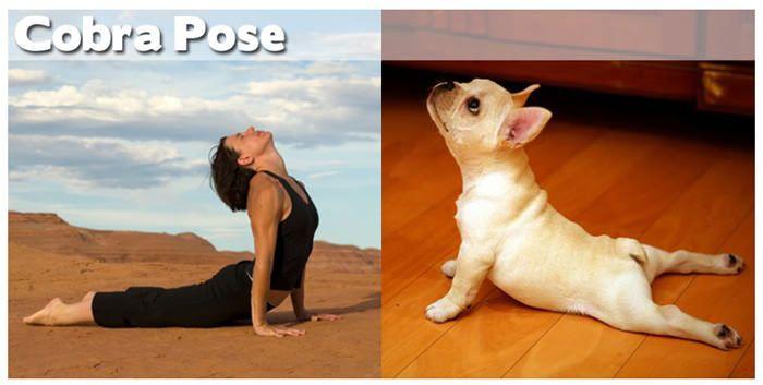 yoga-animals-wildammo-1