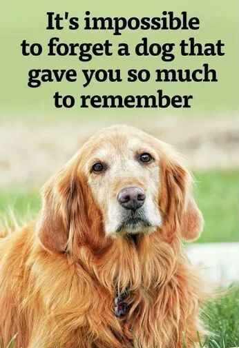 Quotes About Dogs I Sure Miss My Dog That Has Passed Onjust Like A Family Member .