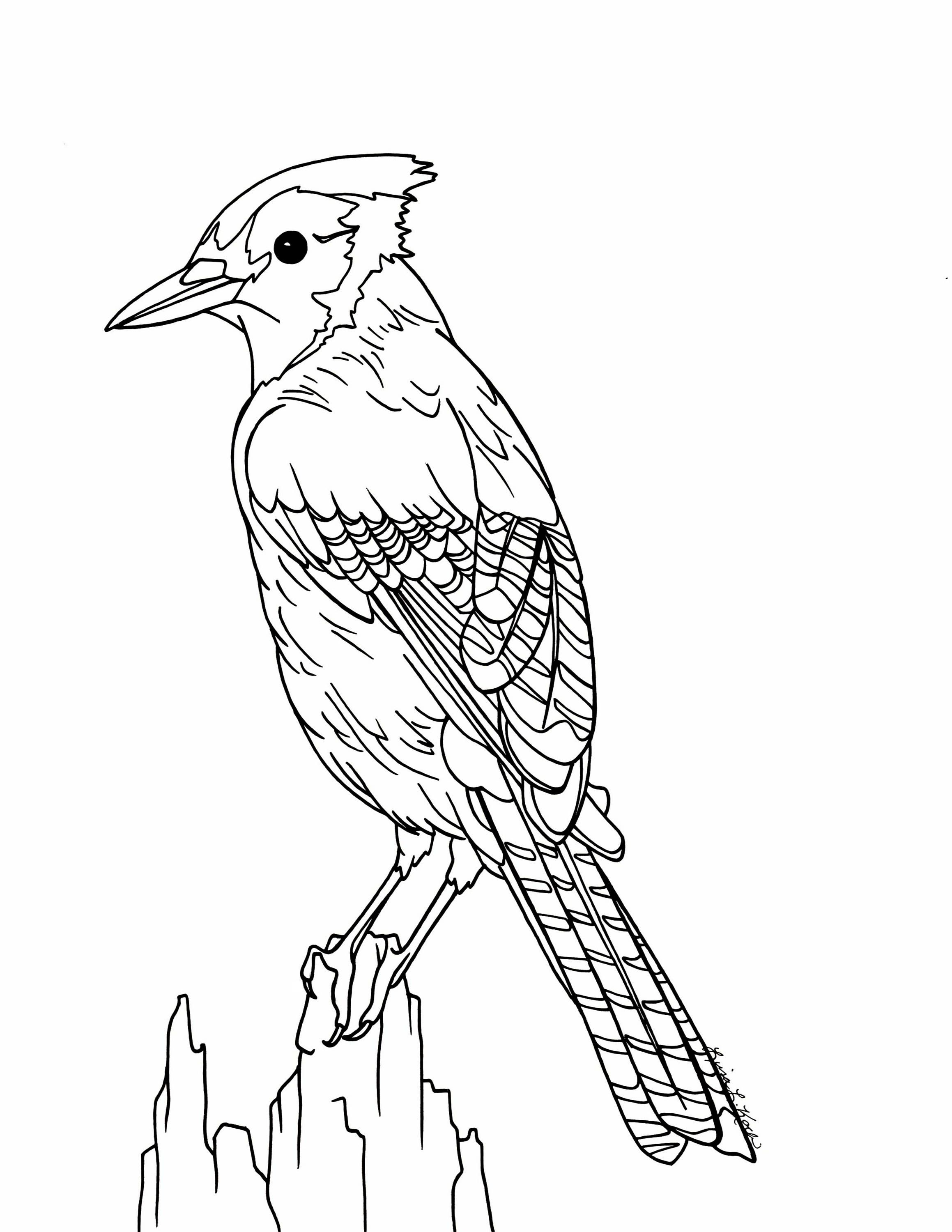Printable Pictures Of Birds Bluebird Coloring Page Printable