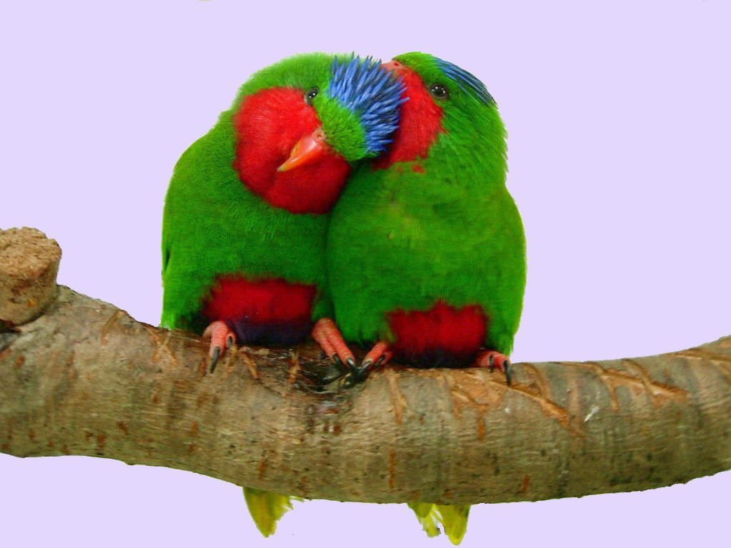 Love Birds Colorful Animal Green Color Nature Photography Pet Birds Birds Colorful Birds