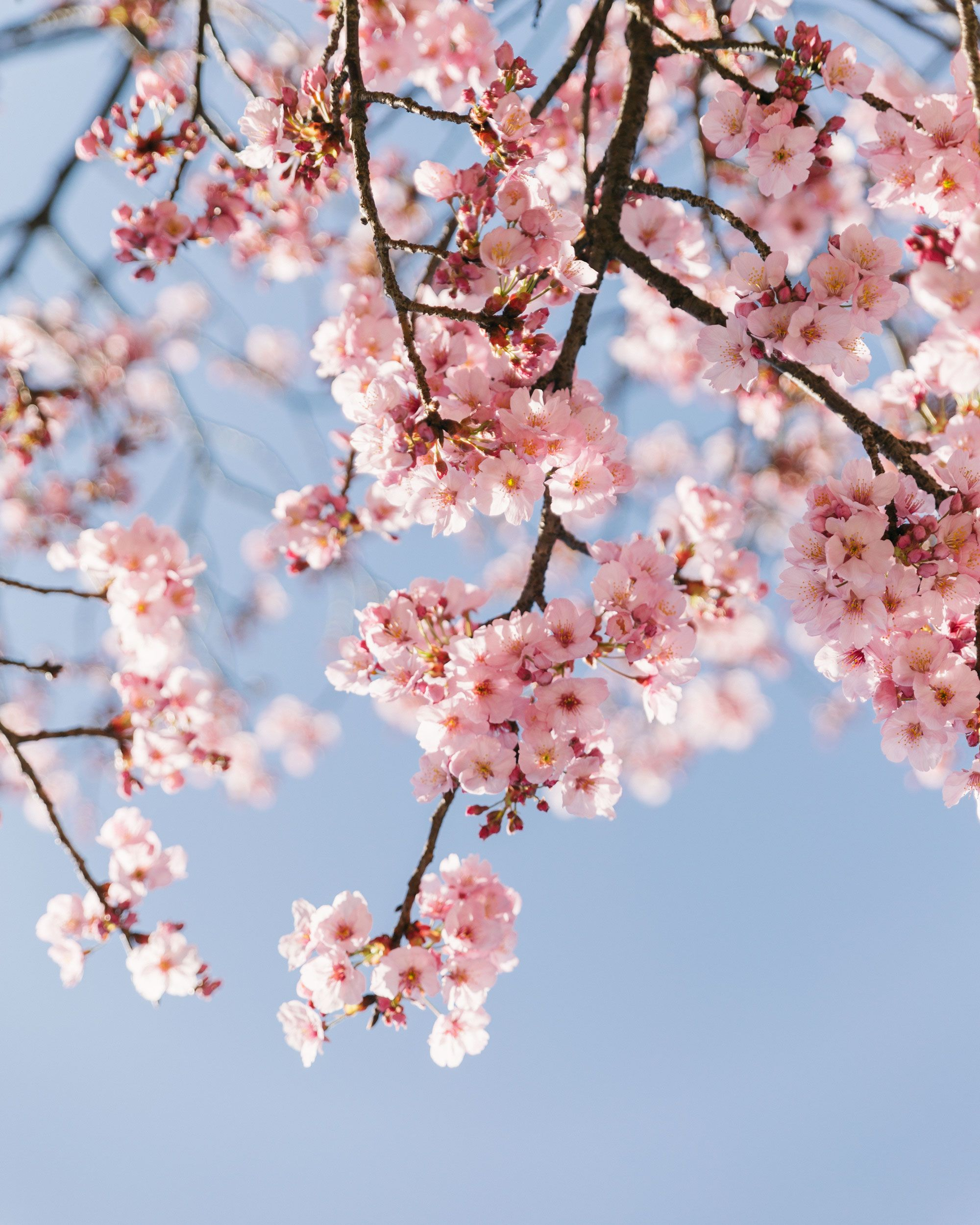 Look Up Spring Is In Bloom Spring Wallpaper Cute Fall Wallpaper Pineapple Wallpaper