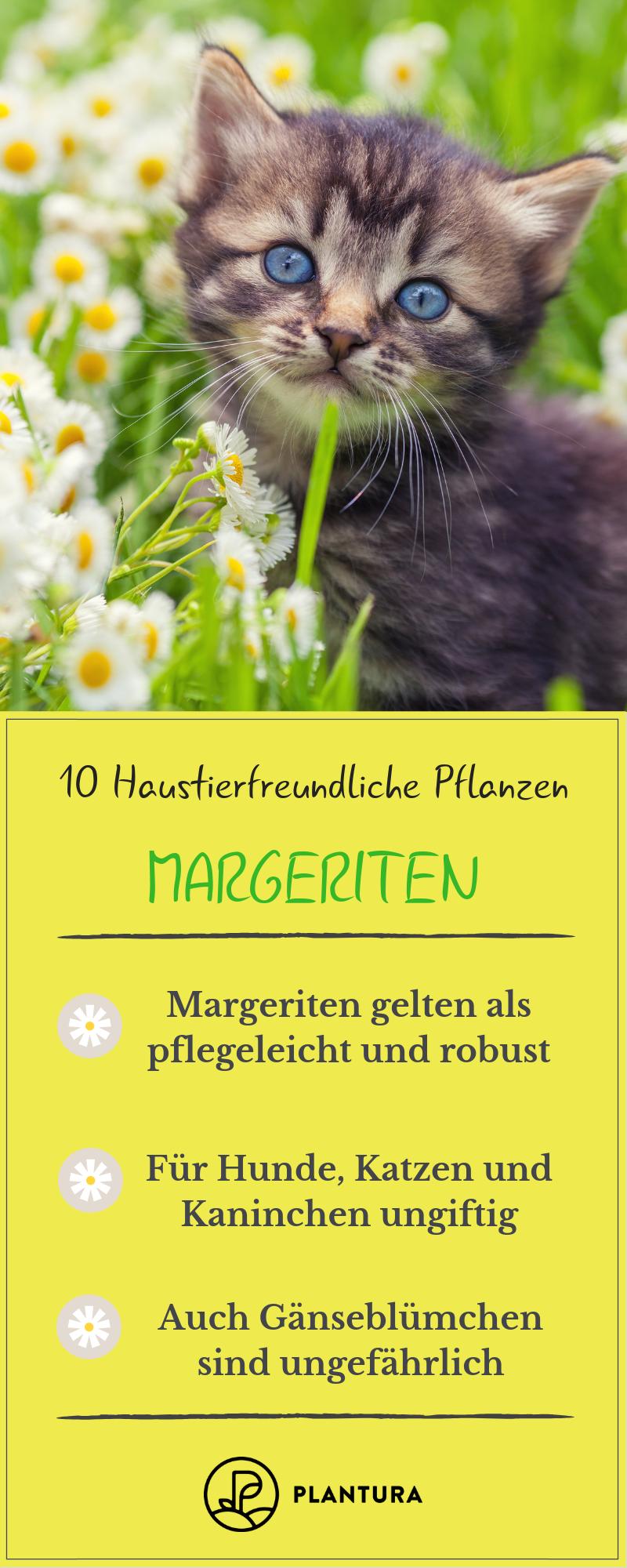 Giftige zimmerpflanzen für kaninchen