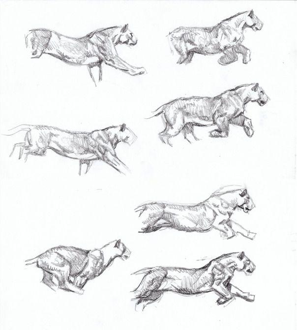 Sabertooth Diaries 3 Big Cat Action Sketches Cat Walk Anatomy