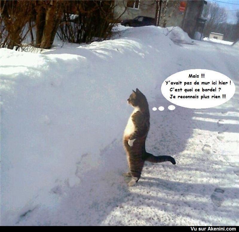 """Résultat de recherche d'images pour """"gifs chats rigolos neige"""""""