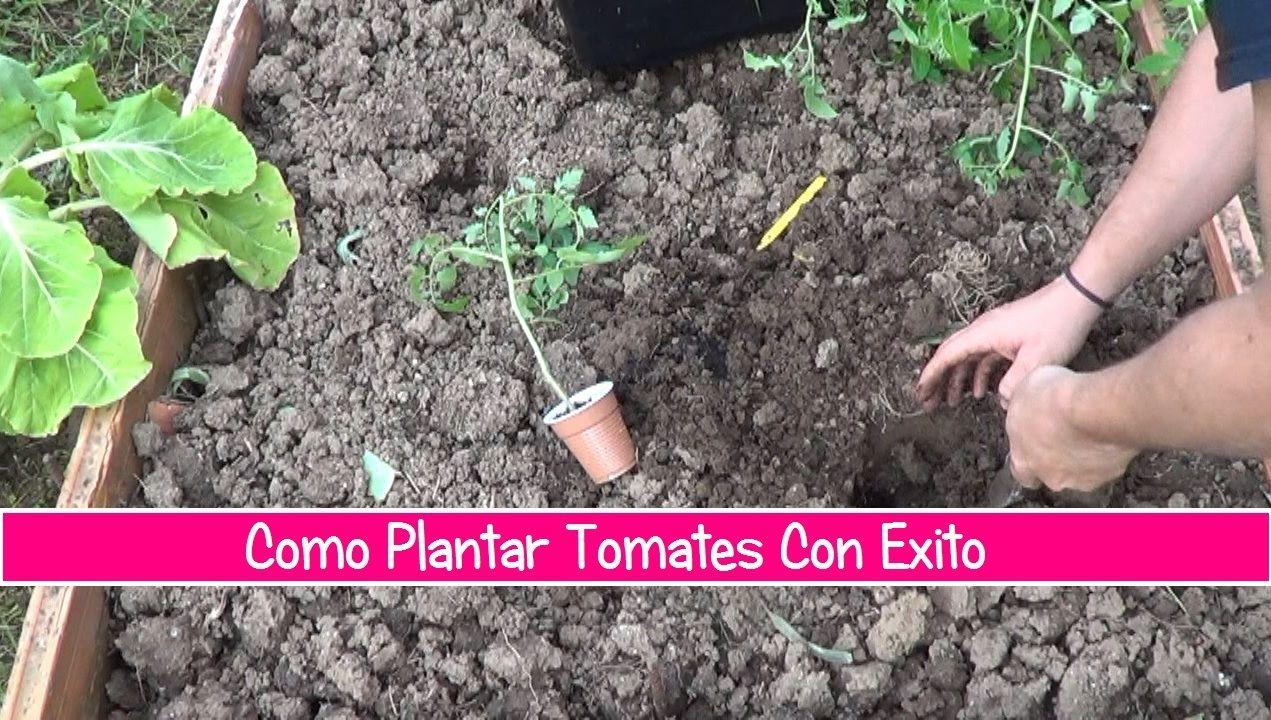 Como Plantar Tomates En El Huerto , de una forma sencilla y facil con este video es como mejor aprenderéis ha hacerlo de una forma visual.