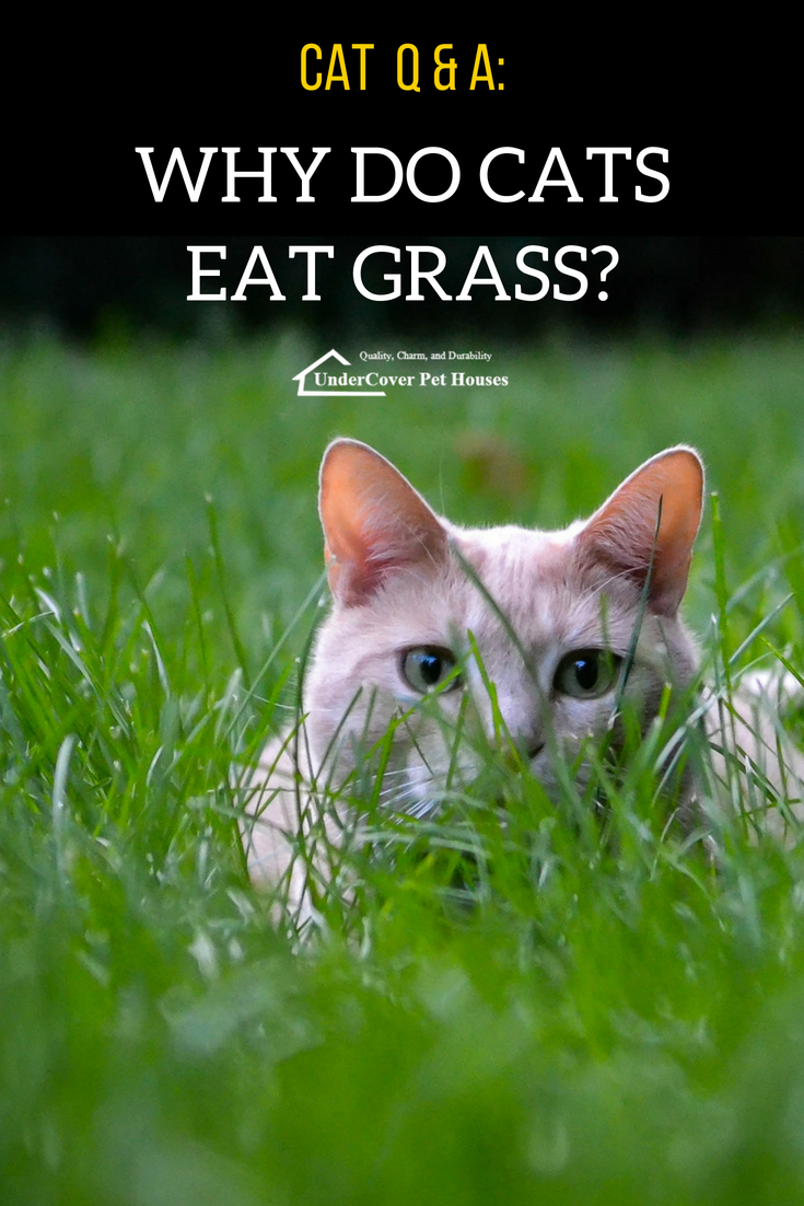 Why Do Cats Eat Grass? Cats, Feral cat house, Cat grass