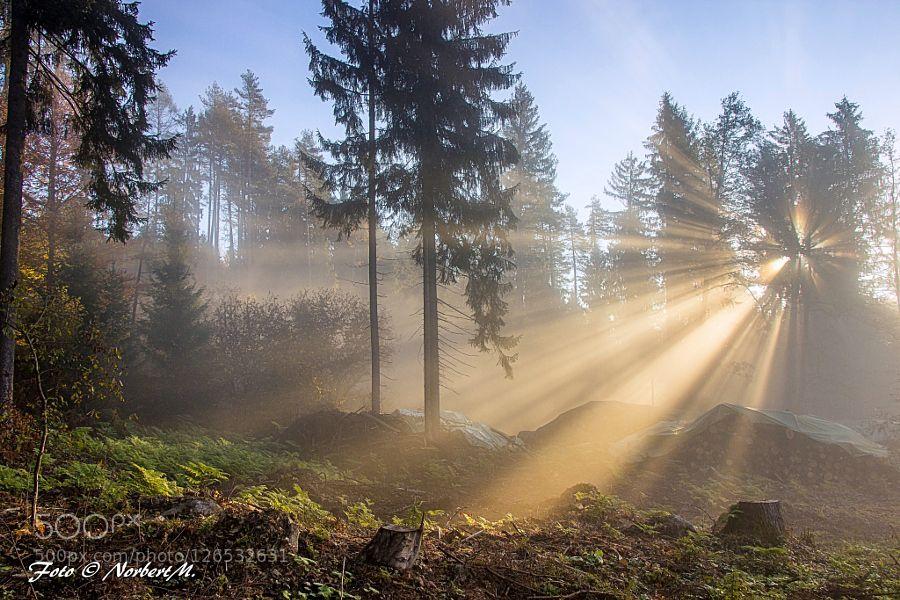.....erste Sonnenstrahlen Erste Sonnenstrahlen durch den Nebel am Oswaldiberg in Villach.