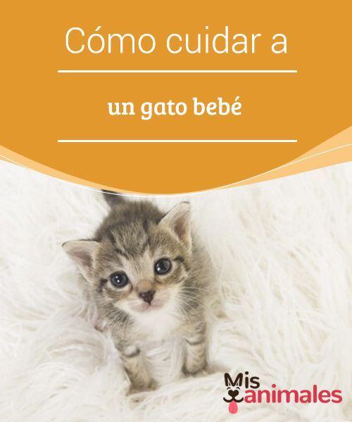 100 Ideas De Olaf Gatos Perro Gato Mascotas